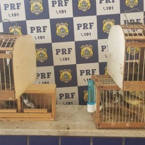 Pássaros silvestres transportados de forma irregular são resgatados em ônibus no sudoeste da Bahia