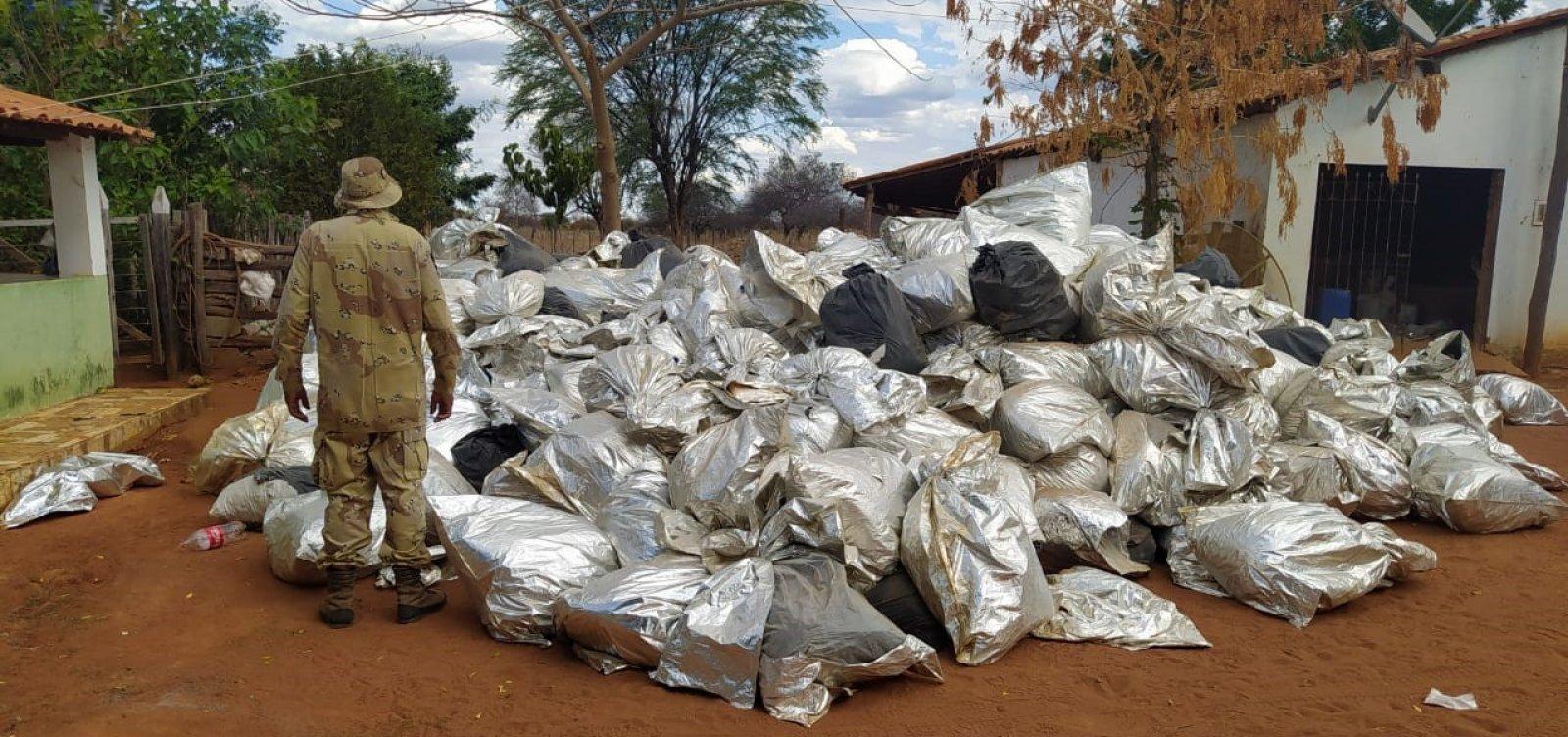 PM apreende mais de 8 toneladas de maconha no interior baiano