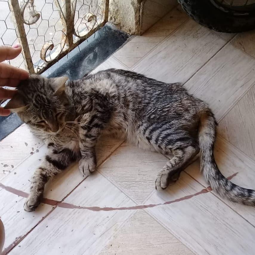 Animal vítima de maus-tratos foi resgatado em Alagoinhas