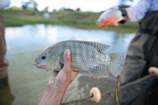 Prefeitura de Alagoinhas busca capacitação técnica para fomentar a piscicultura no município